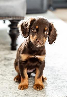 James' Dog, Lily